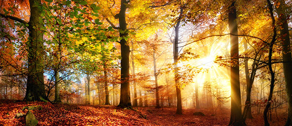 Herbstwald in Hösseringen
